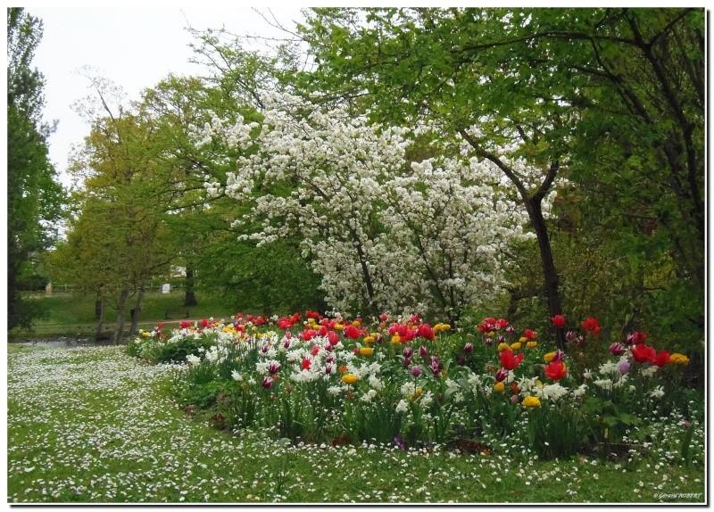 Le printemps le printemps, enfin de la couleur ! P4300011