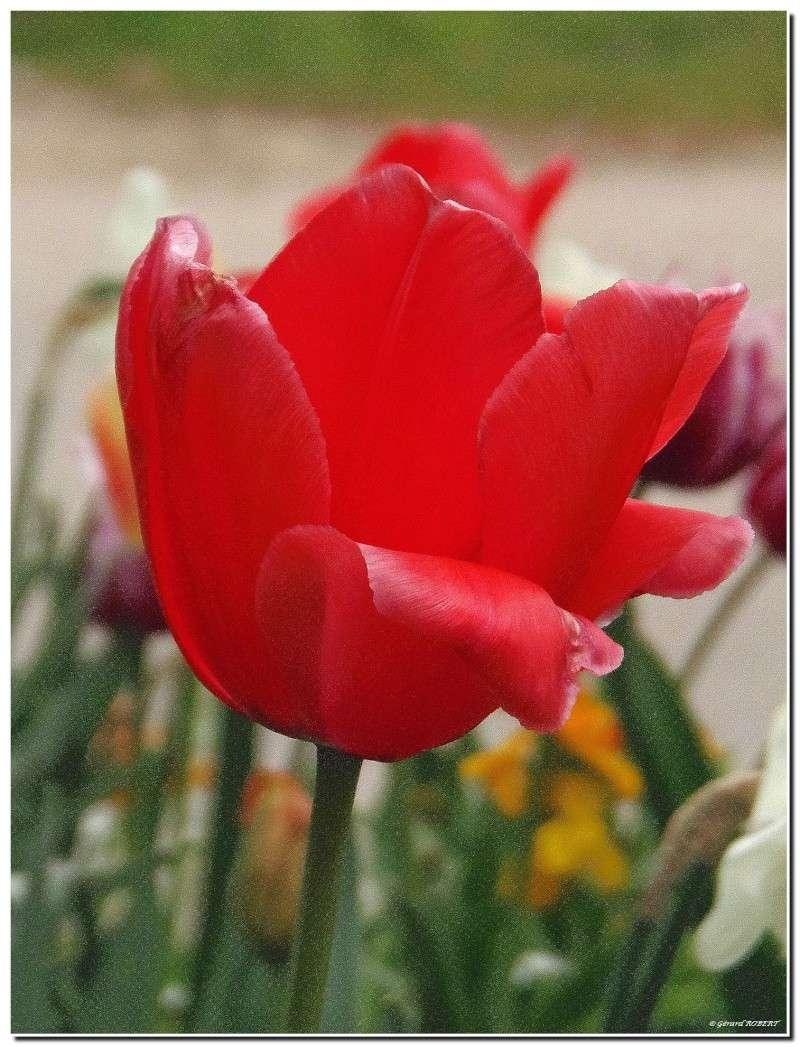 Le printemps le printemps, enfin de la couleur ! P4300111