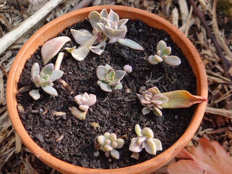 On l'appelle fleur de Porcelaine - Page 9 Dsc01464