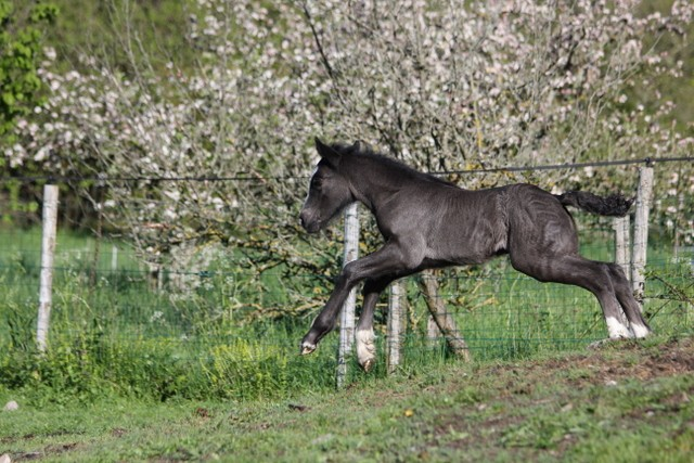 """Concours photo """"L'irish cob dans les fleurs"""" Img_1613"""