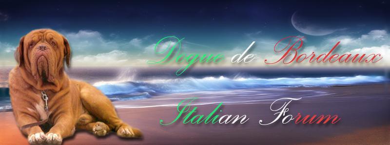 Dogue De Bordeaux Italian Forum