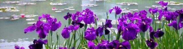 ART DU JARDIN jardins d'exception, fleurs d'exception 1_1_1425