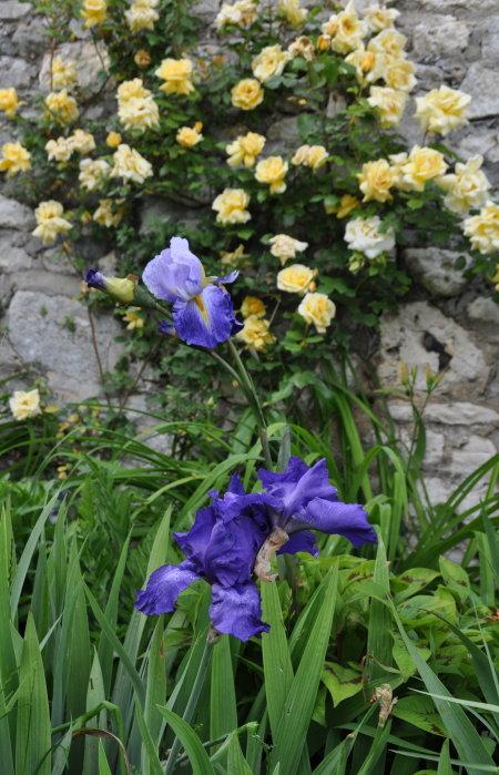 ART DU JARDIN jardins d'exception, fleurs d'exception 1_1_1430