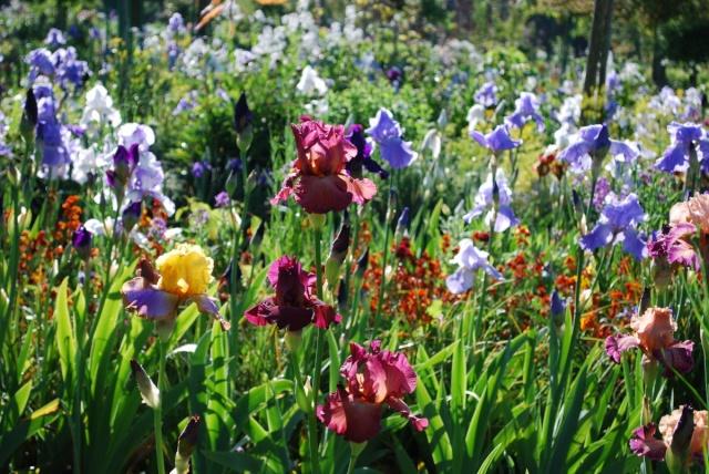 ART DU JARDIN jardins d'exception, fleurs d'exception 1_1_1432