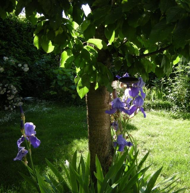 ART DU JARDIN jardins d'exception, fleurs d'exception 1_1_1433