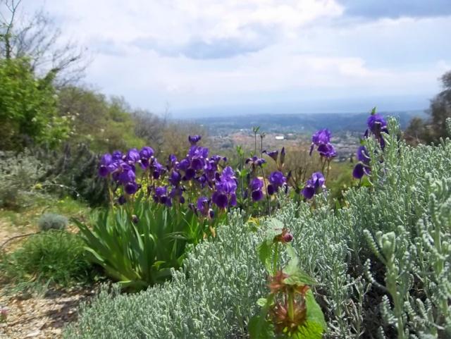 ART DU JARDIN jardins d'exception, fleurs d'exception 1_1_1434