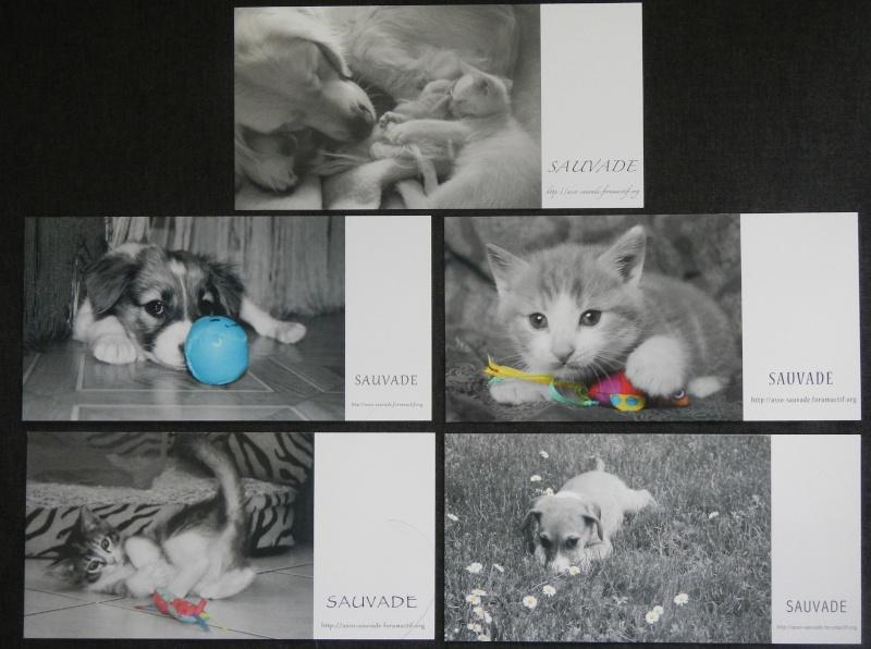 "5 cartes ""surprises"" Assort10"