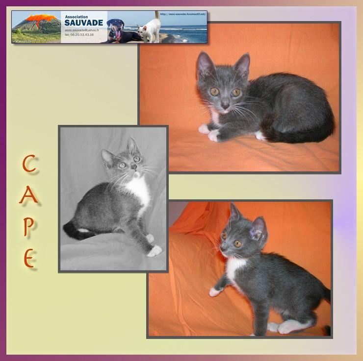 CAP Cape10