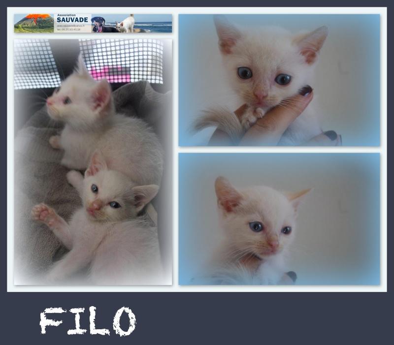 FILO et JAZZY Filo10