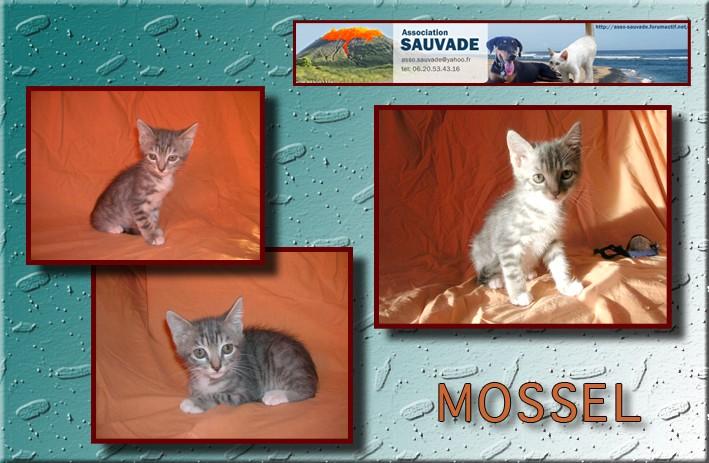 MERLIN (Mossel) Mossel10