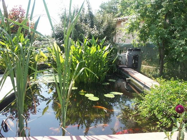 Bienvenue chez les Koïs...mon bassin Pict0212