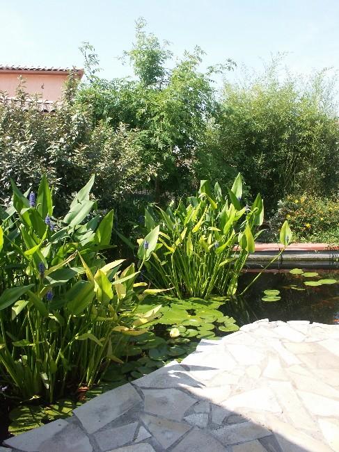 Bienvenue chez les Koïs...mon bassin Pict0213