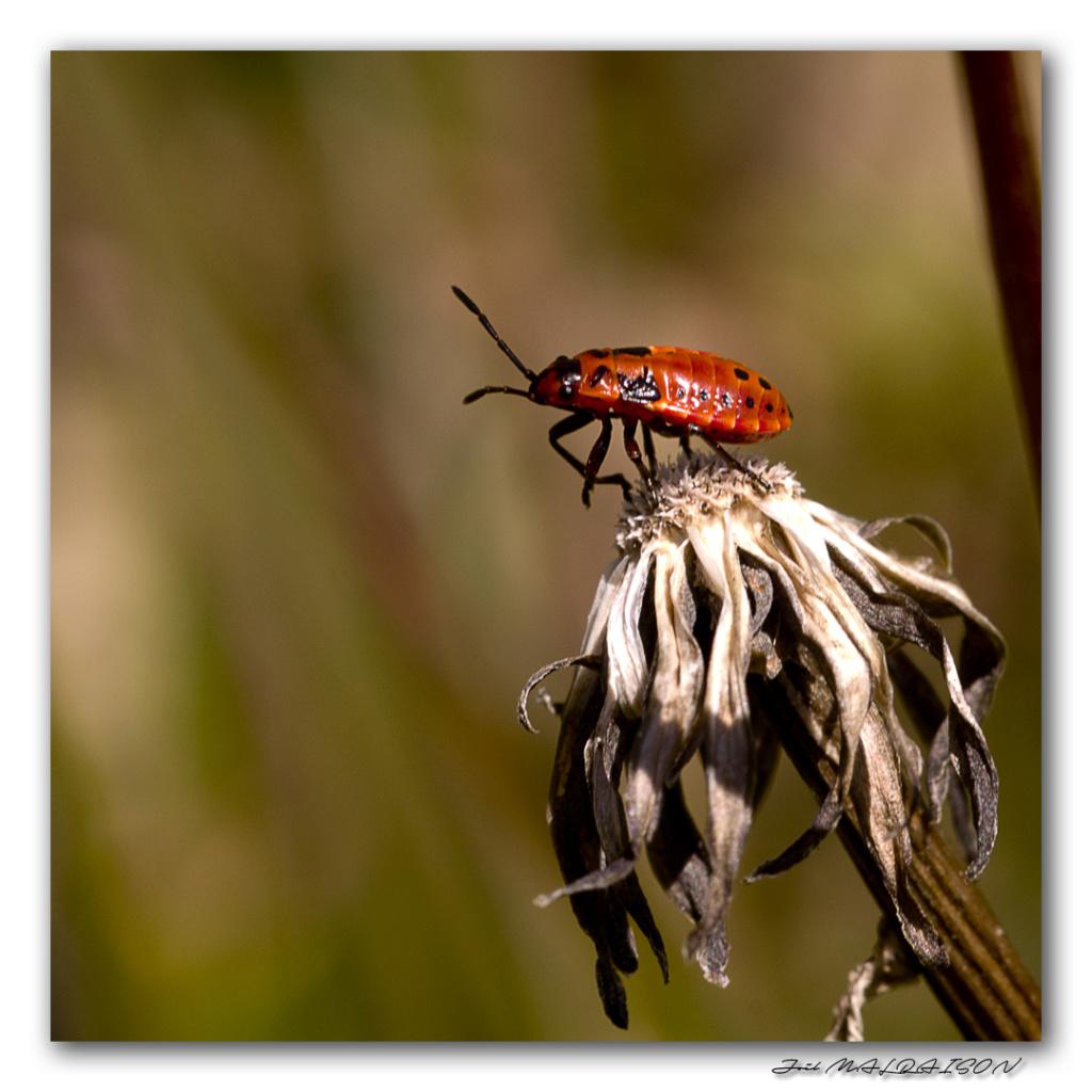 Macros/  proxi/  insectes  - Page 12 Imgp5510