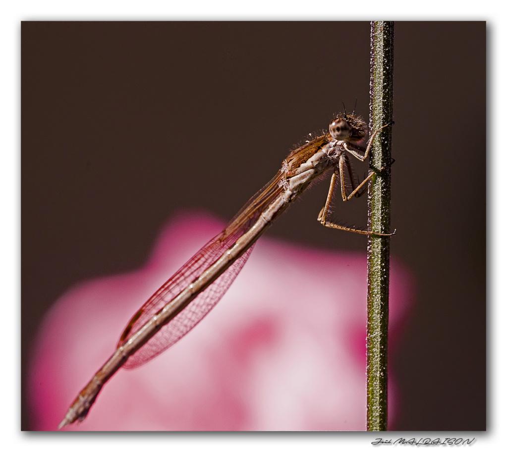 Macros/  proxi/  insectes  - Page 5 Imgp5610