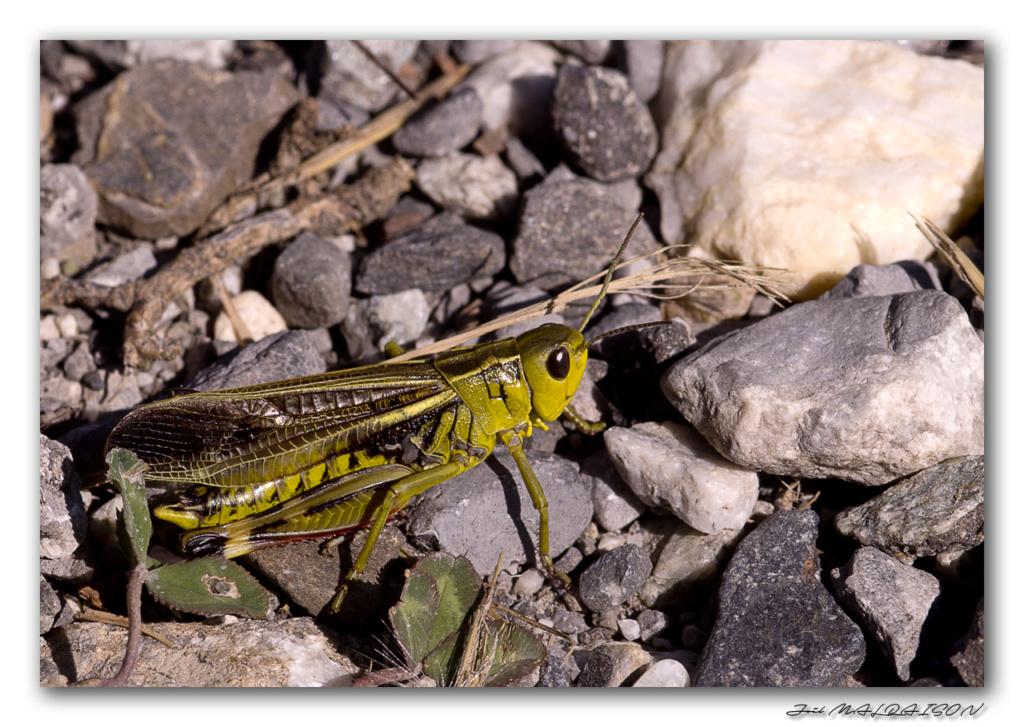 Macros/  proxi/  insectes  - Page 12 Imgp5614