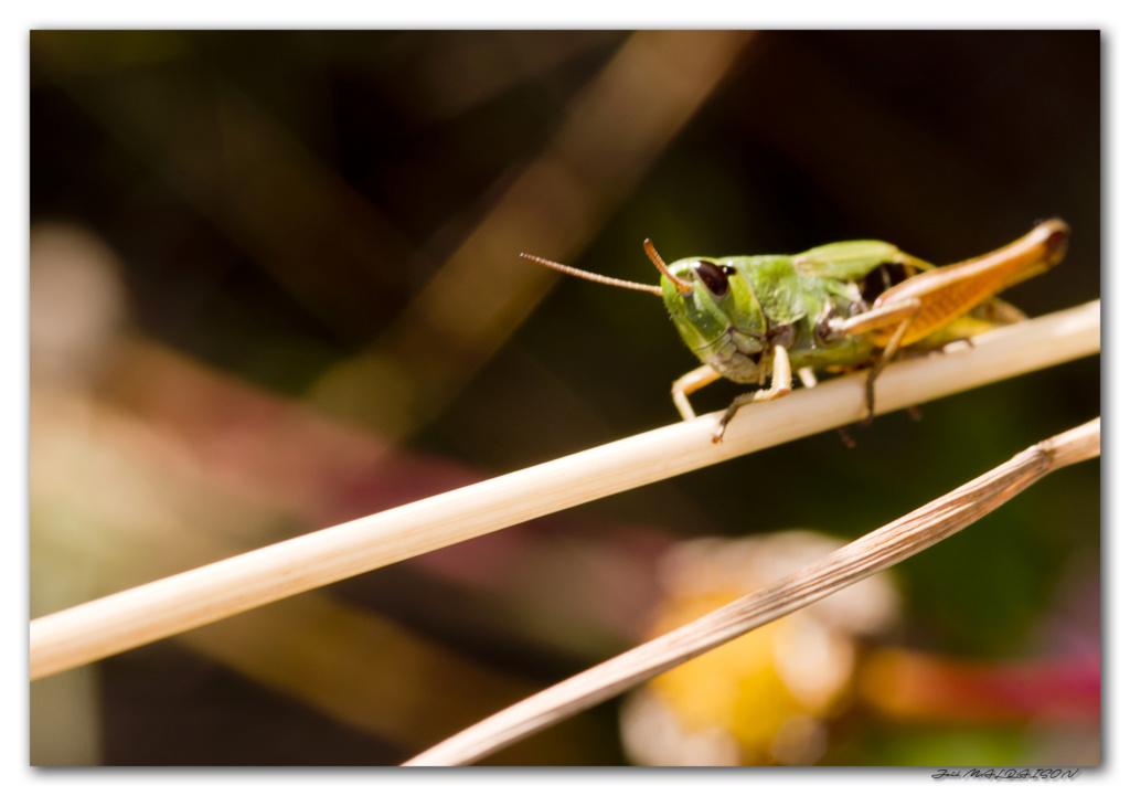 Macros/  proxi/  insectes  - Page 12 Imgp5615