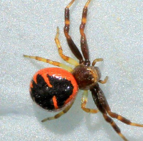 L'araignée, une espèce à protéger ! - Page 3 Araign12