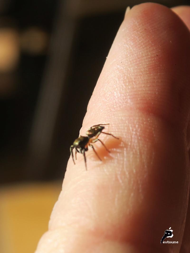 L'araignée, une espèce à protéger ! - Page 2 Img_6512