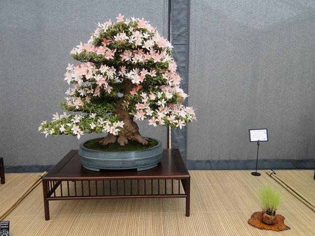 re:satsuki flower trophy 2013  00310