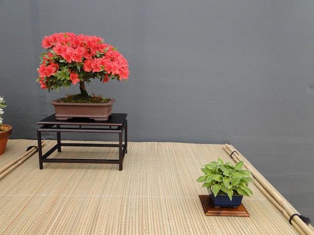 re:satsuki flower trophy 2013  00410