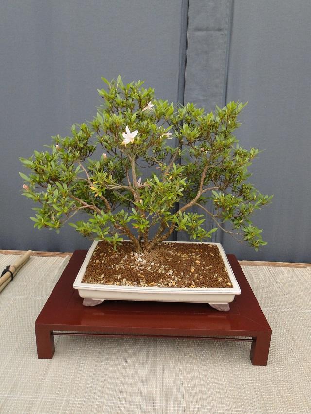 re:satsuki flower trophy 2013  01610