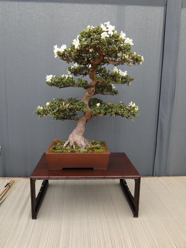 re:satsuki flower trophy 2013  01710