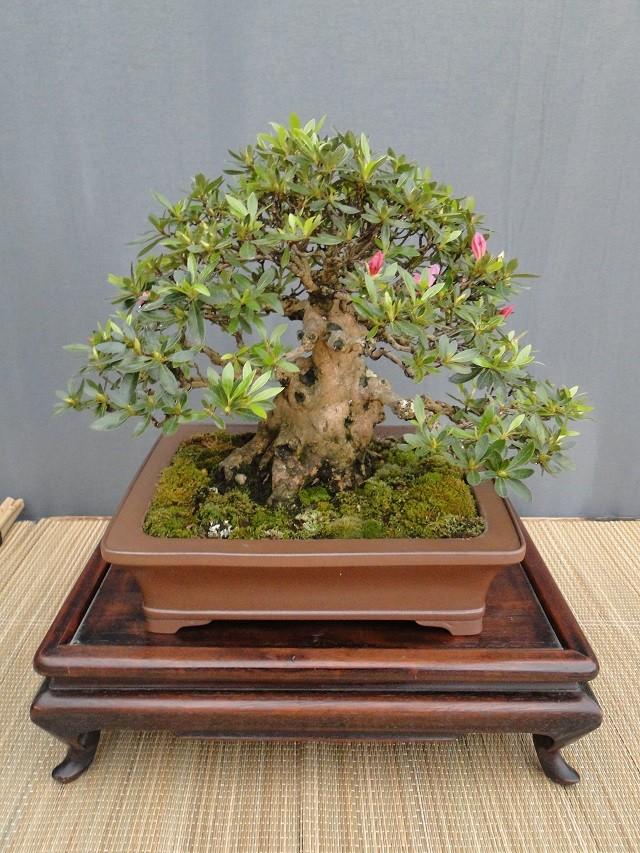 re:satsuki flower trophy 2013  02010