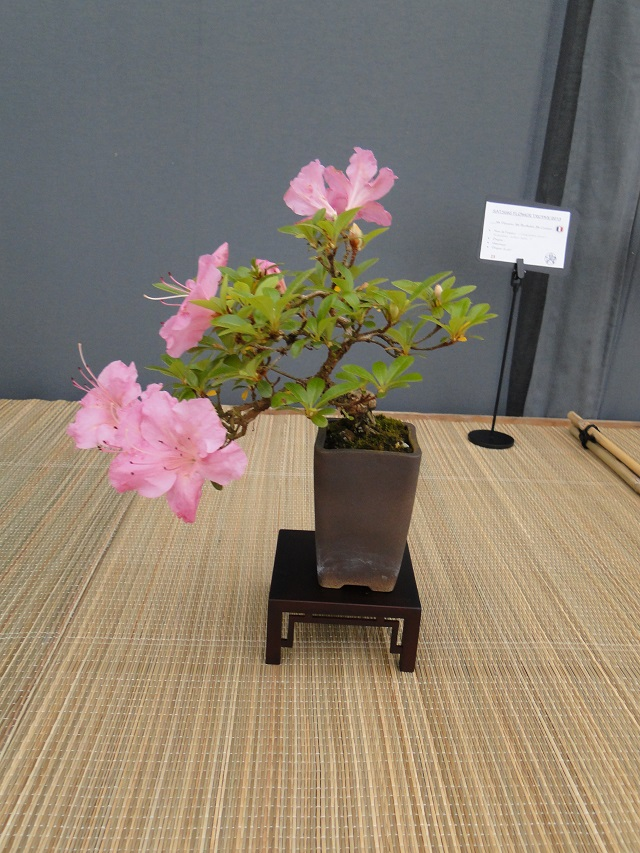 re:satsuki flower trophy 2013  02410