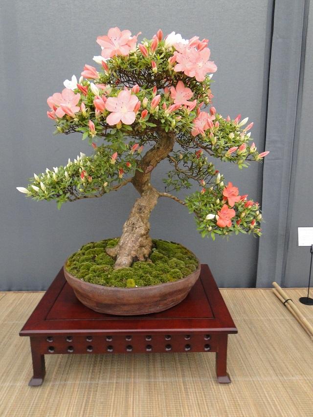 re:satsuki flower trophy 2013  02710