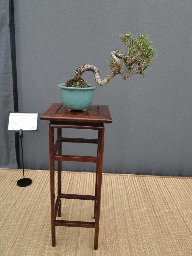 re:satsuki flower trophy 2013  03010