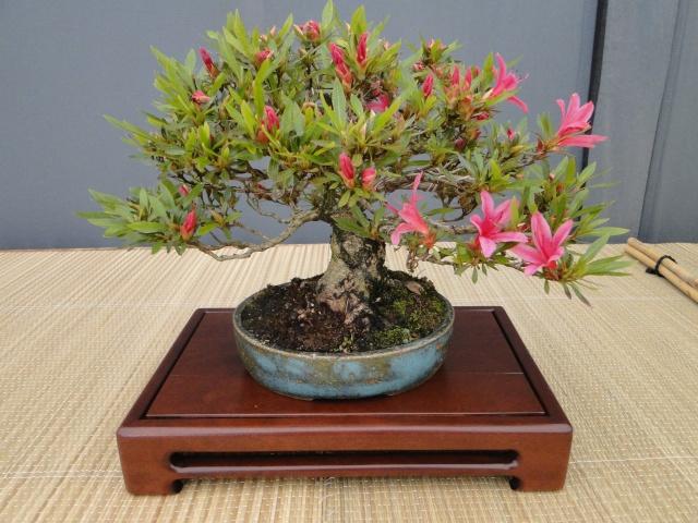 re:satsuki flower trophy 2013  03110