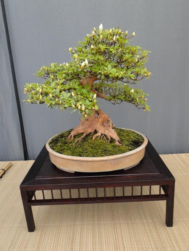 re:satsuki flower trophy 2013  03210