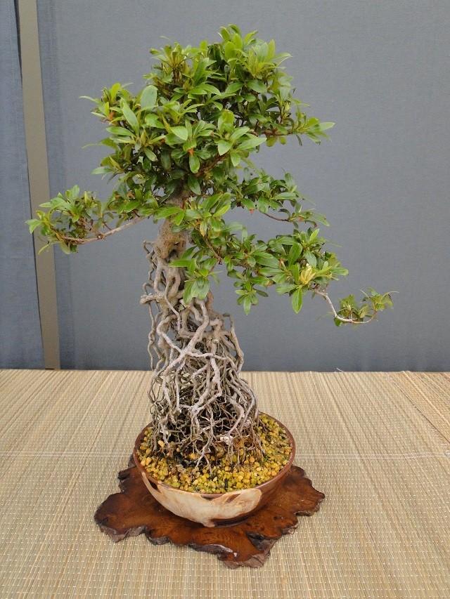 re:satsuki flower trophy 2013  03410