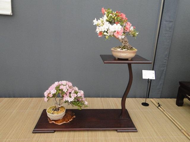 re:satsuki flower trophy 2013  03510