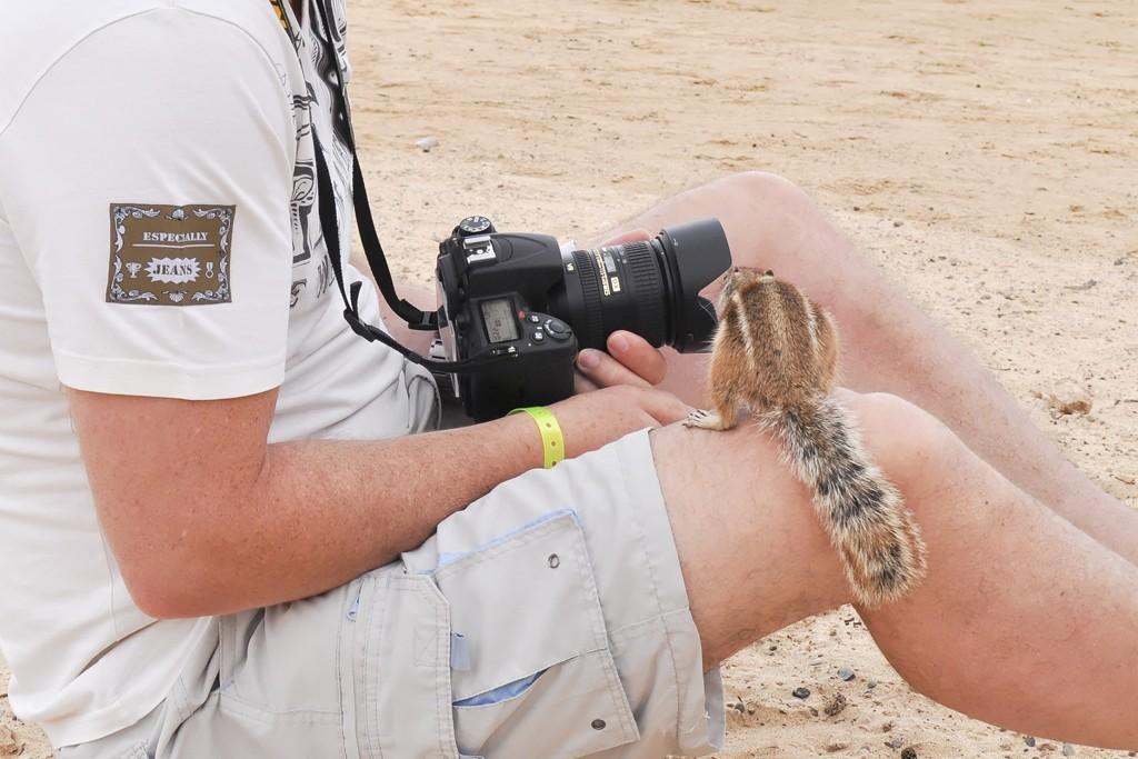 Ecureuils à Fuerteventura Dsc_0111