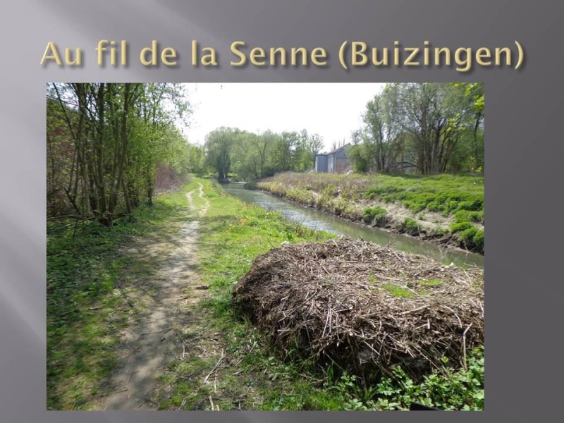 Canal Bruxelles-Charleroi  partie Flamande Halle(Lembeek) - Sint-Pieters-Leeuw - EV5 - Eurovelo 5 - F20 - Page 2 60357910