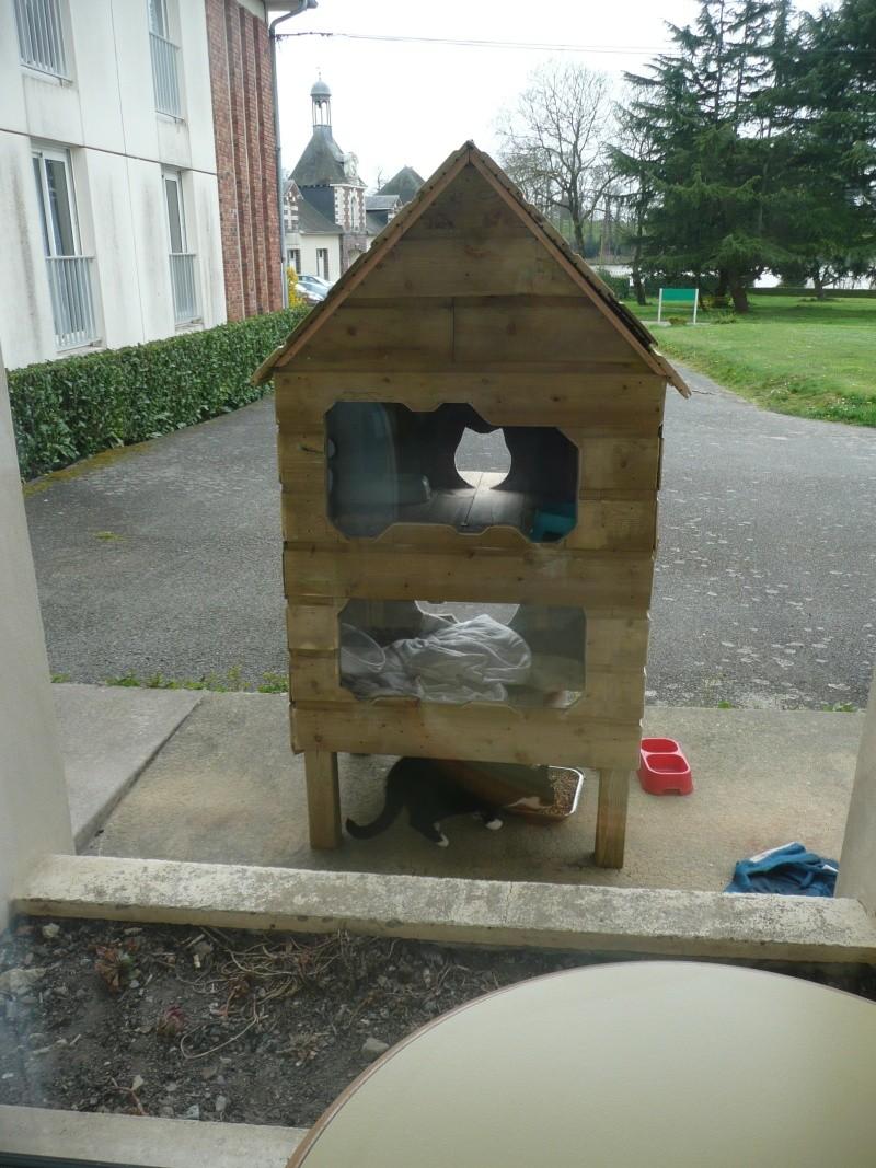 Une bien belle histoire à prendre en exemple - une maison de retraite accueille des chats nomades !!! P1100711