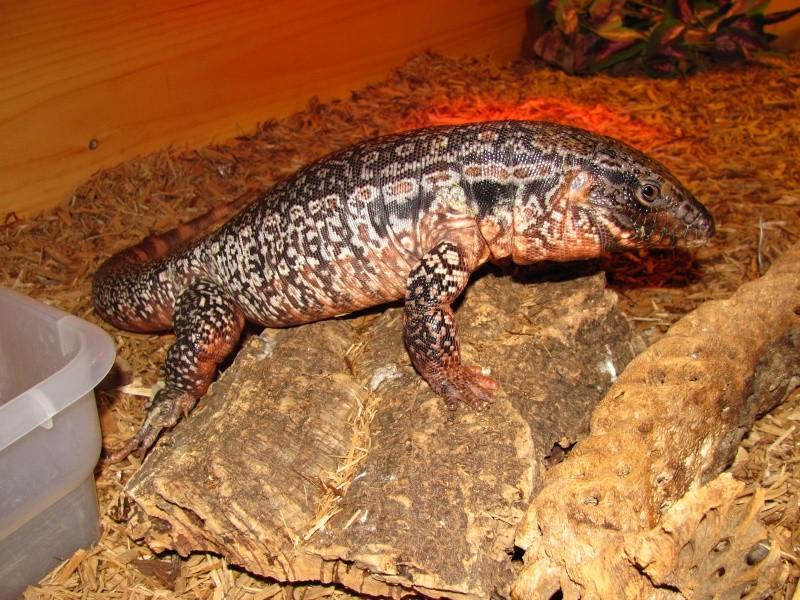 My reptiles Img_1011