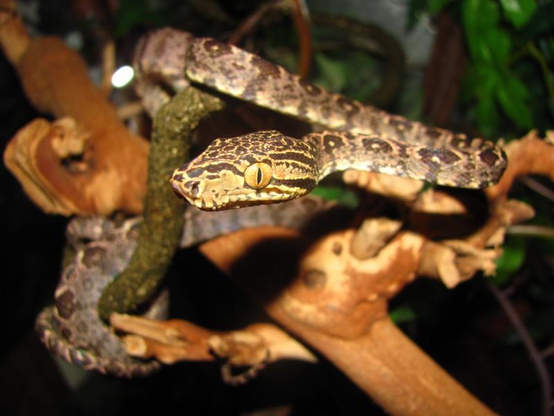 My reptiles Img_2610