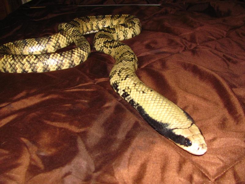 My reptiles Img_3510