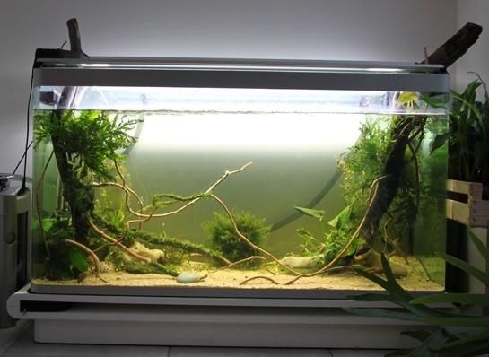 Mur végétal avec aquarium de 320L ---> Paludarium Aqua10