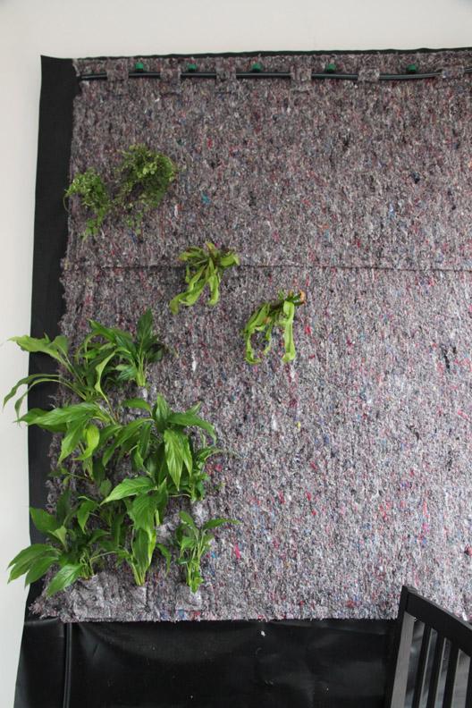 Mur végétal avec aquarium de 320L ---> Paludarium - Page 2 Etape710