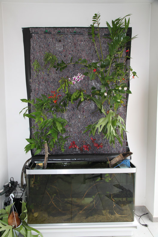 Mur végétal avec aquarium de 320L ---> Paludarium - Page 2 Etape810