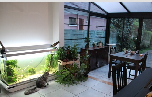 Mur végétal avec aquarium de 320L ---> Paludarium Verand10
