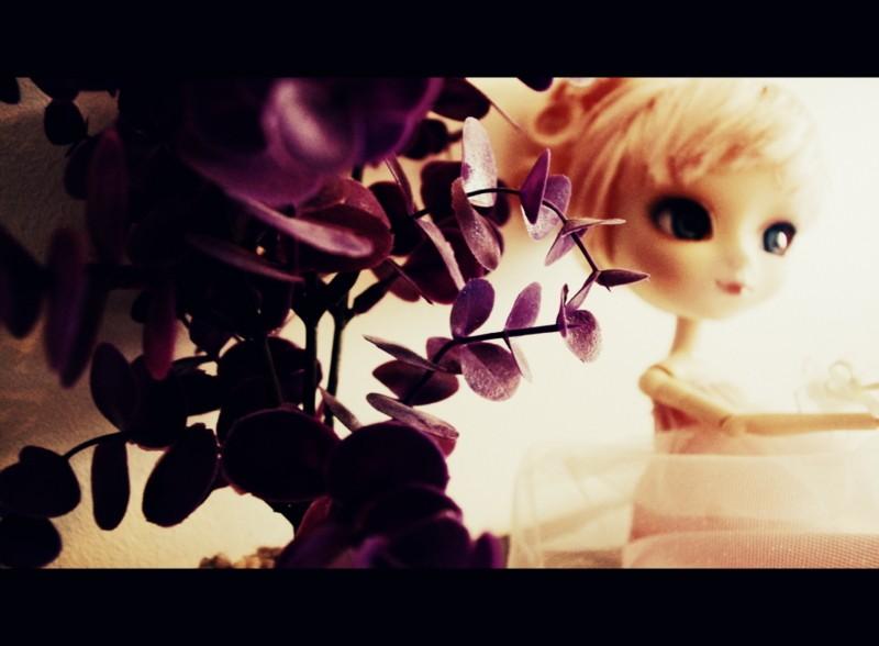 Capharnaüm ★ Présentation ~ Imgp9010
