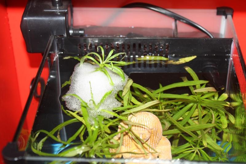 [ PHOTOS ] Les nids de bulles de nos poissons - Page 3 Img_3010