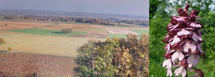 Dossier charte du paysage bâti et naturel réalisé en avril 2013 Thuris12