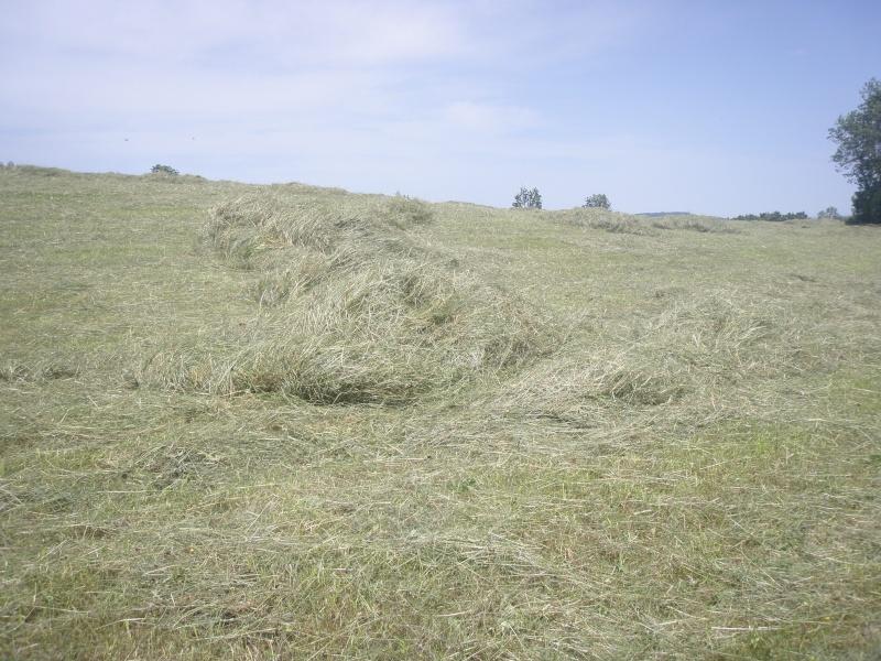 Recolte d'herbe 2013: qui fauche? - Page 10 P6171114