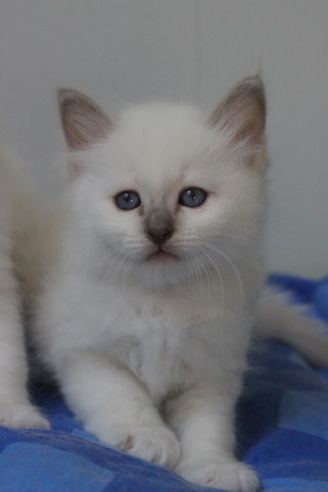 Nom pour un chat Img_6110