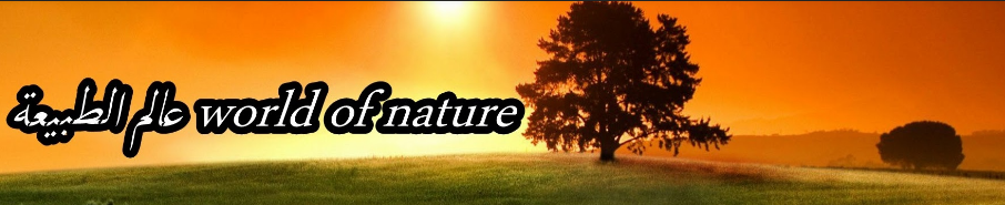 عالم الطبيعة world of nature